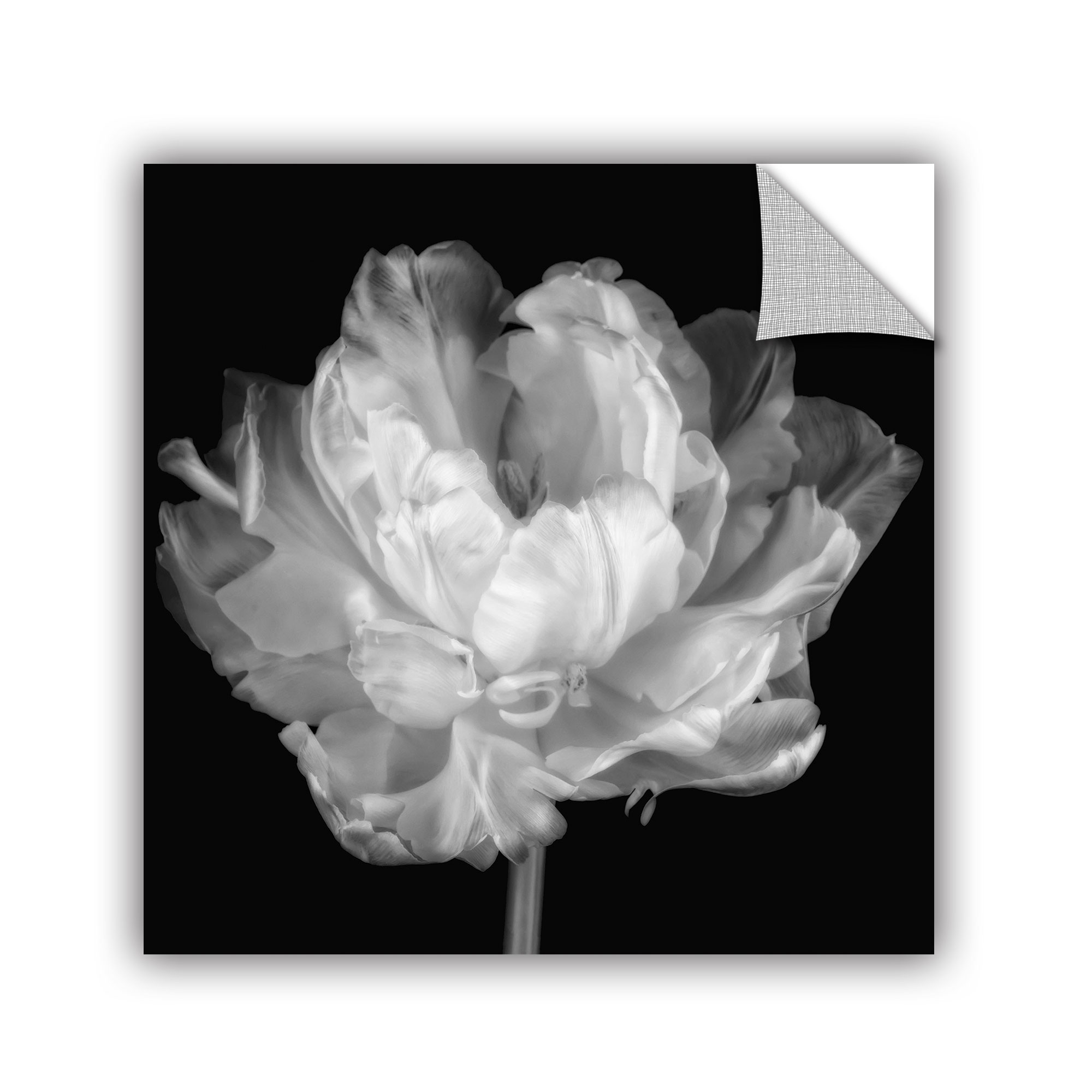 'Tulipa Double Black and White I' Removable Wall Art Mural