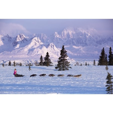 During Spring Training - DeeDee Jonrowe mushes her dog team during a spring training run at dawn with Mt Mckinley and the Alaska Range in the background Denali State park Southcentral Alaska Stretched Canvas - Jeff Schultz