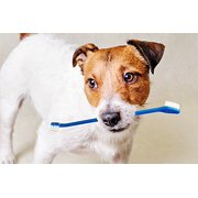 Dog Toothbrush Set and Cat Toothbrush Set – Two Dual-Headed Brushes Cleaning Kit – Dental Care Pet Supplies – By , 88 pets Fresh Hammer Remover Headed Paws Bristles your.., By TenTen Labs