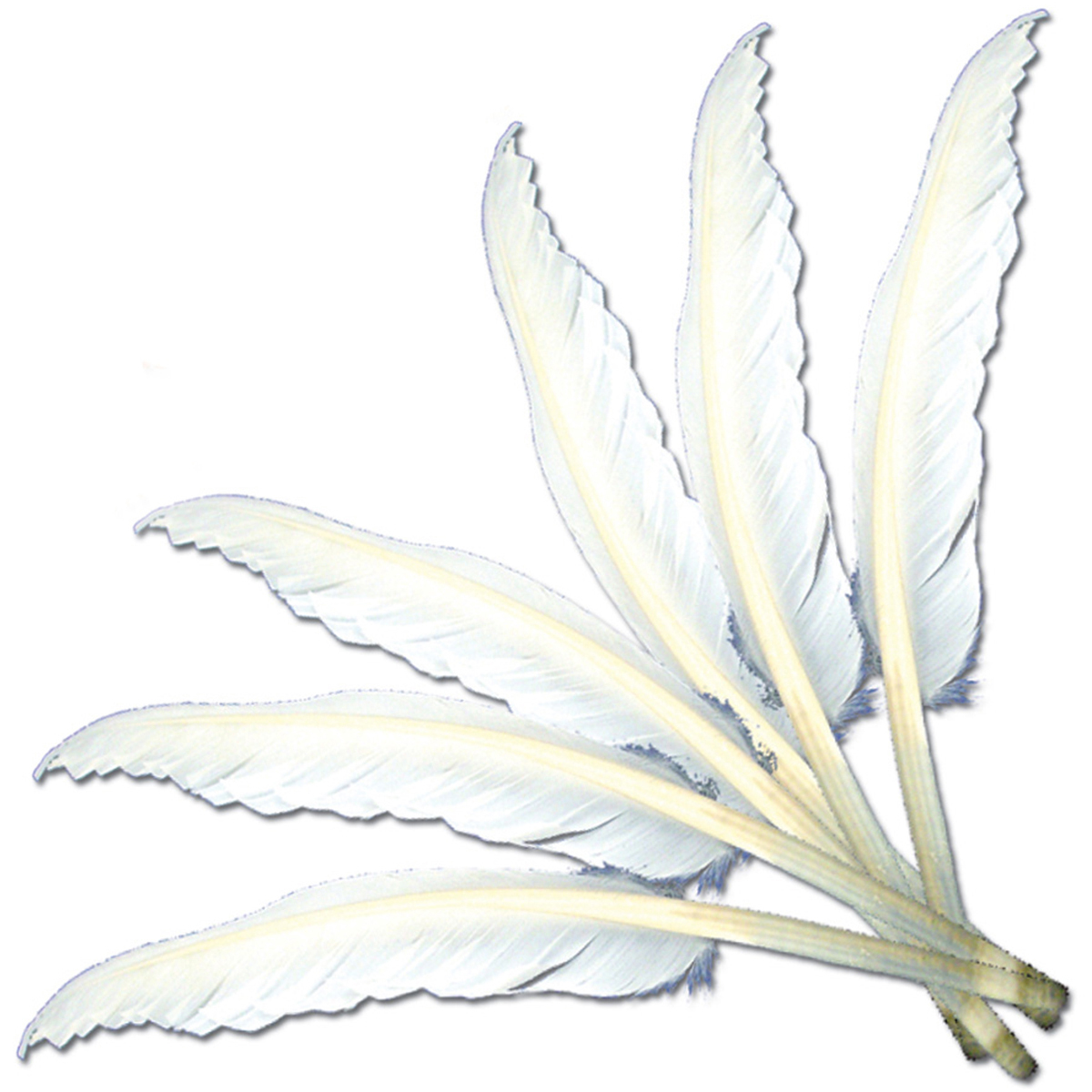 "Feathers 10""-12"" 6/Pkg-White MD38172"