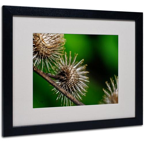 "Trademark Fine Art ""Prickly"" by Lois Bryan, Black Frame"