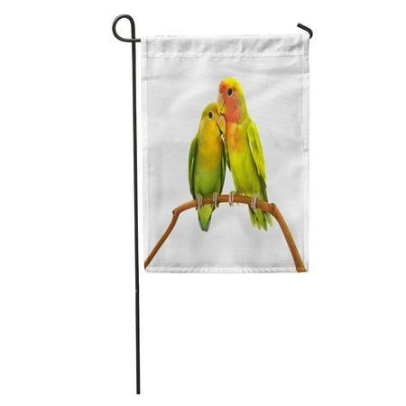 KDAGR Colorful Bird Beautiful Green Parrot Lovebird Orange Love Agapornis Garden Flag Decorative Flag House Banner 12x18 inch