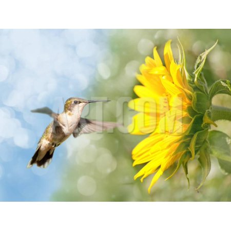Dreamy Image Of A Hummingbird Next To A Sunflower Print Wall Art By Sari ONeal