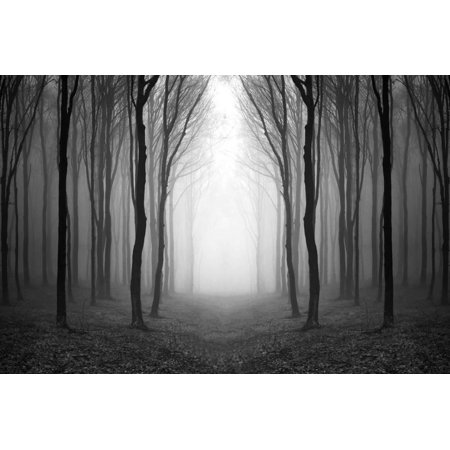 Dark Woods Moody Black and White Forest Photo Print Wall Art By PhotoINC