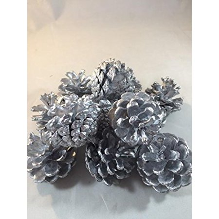 White Spruce Pine Cones Decorative Home Decor Bowl Displays Crafting 8 Ounce (Pine Cone Crafts For Adults)