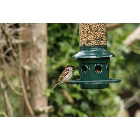 Canvas Print Feeding Birds Bird Feeder Sparrow Nature Stretched Canvas 10 x 14