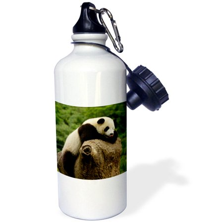 3dRose Giant panda bears, Wolong China Conservation, CHINA-AS07 POX0374 - Pete Oxford, Sports Water Bottle, 21oz (Giant Coke Bottle)