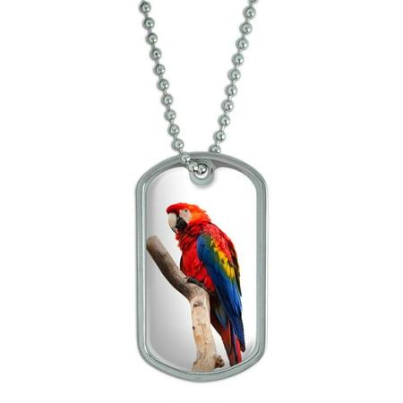 Scarlet Macaw - Bird Parrot Dog
