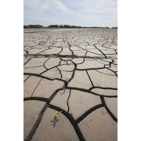 Large Cracks In The Earth From Dry Ground Manitoba Canada Posterprint