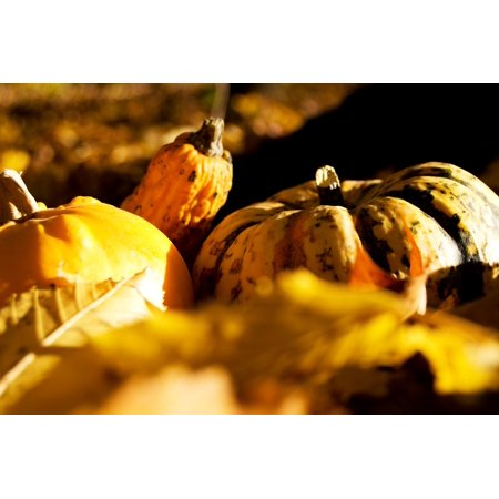 LAMINATED POSTER Halloween Yellow Autumn Pumpkin Gourd Poster Print 24 x 36