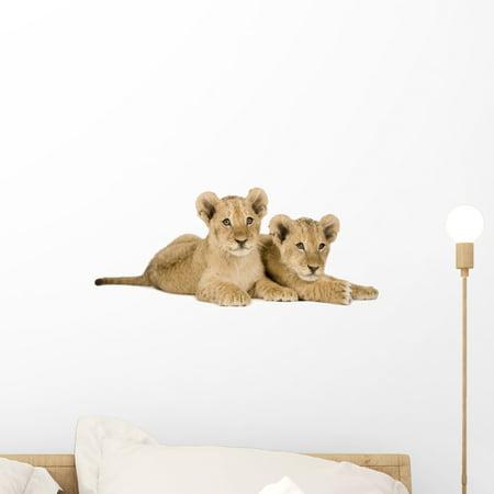 Lion Cub Front White Wall Decal Sticker, Wallmonkeys Peel & Stick Vinyl Graphic (18 in W x 8 in H) ()