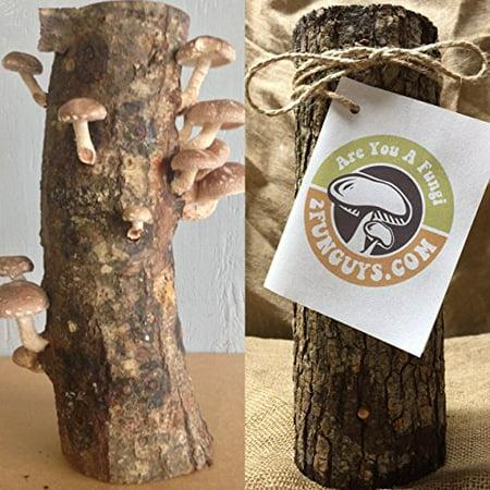Mushroom Growing Kit (12