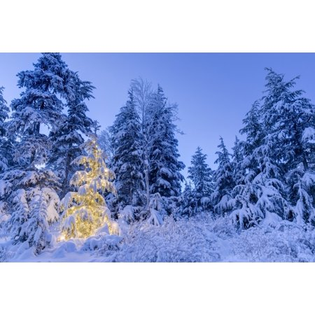 A small Mountain Hemlock Tsuga mertensiana tree glows lights wrapped around it fresh snow covering it surrounding trees deep blue twilight filling scene Moose Pass Kenai Peninsula South