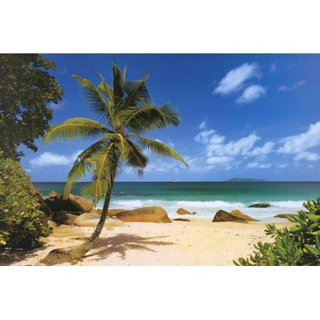Bench Poster Print (Palm Beach (Tropical Landscape Photo) Art Poster Print Poster - 36x24 )