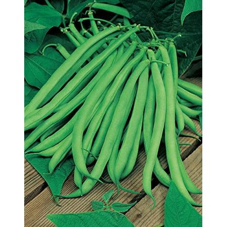 Bean Blue Lake Great Heirloom Garden Vegetable By Seed Kingdom 30 Seeds