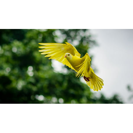 Canvas Print Animal Nature Dove Bird Wing Stretched Canvas 10 x 14