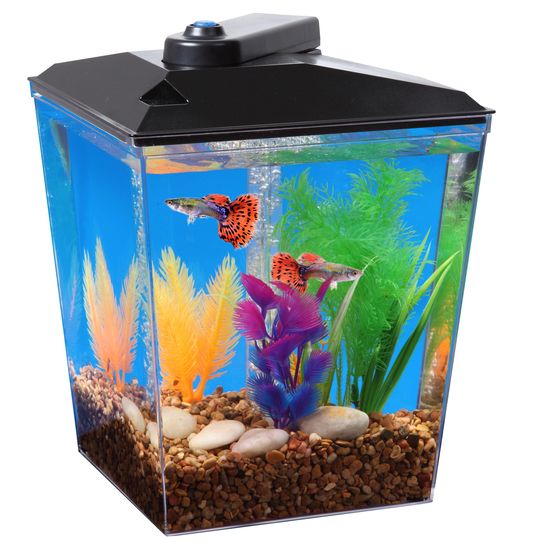 "Aqua Culture 1-Gallon Aquarium Kit, LED Lighting and Internal Power Filter, 7.5""L x 7.5""W x... by Koller Products"