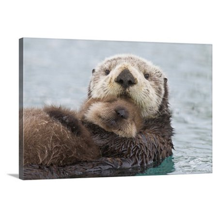 Great BIG Canvas Female Sea Otter Holding Newborn Pup Out of Water Prince William Sound Canvas Wall Art