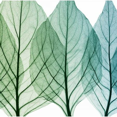 Celosia Leaves Ii Poster Print by Steven N Meyers