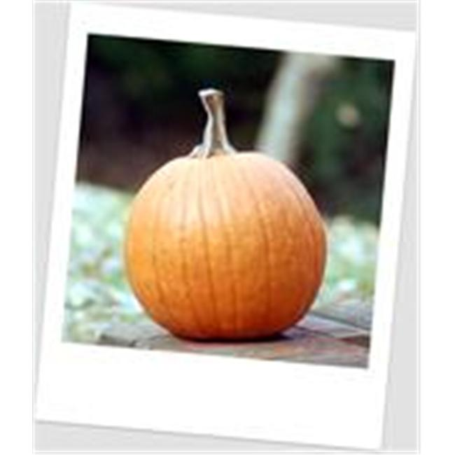 Craft-Tex PUM 3 Medium Pumpkin Fall Harvest