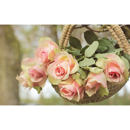 LAMINATED POSTER Flowers Pink Roses Noble Roses Branch Basket Tree Poster Print 24 x 36