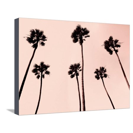 Palm Trees 1997 Copper Pink Tropical Tree Fine Art Photo Stretched Canvas Print Wall By Erik Asla