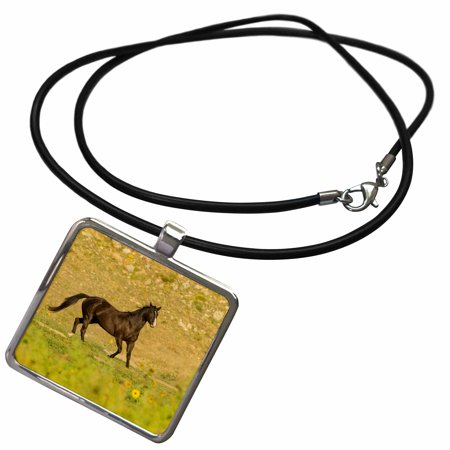 3dRose USA, South Dakota, Wild Horse Sanctuary. Wild horse in field. - Necklace with Pendant