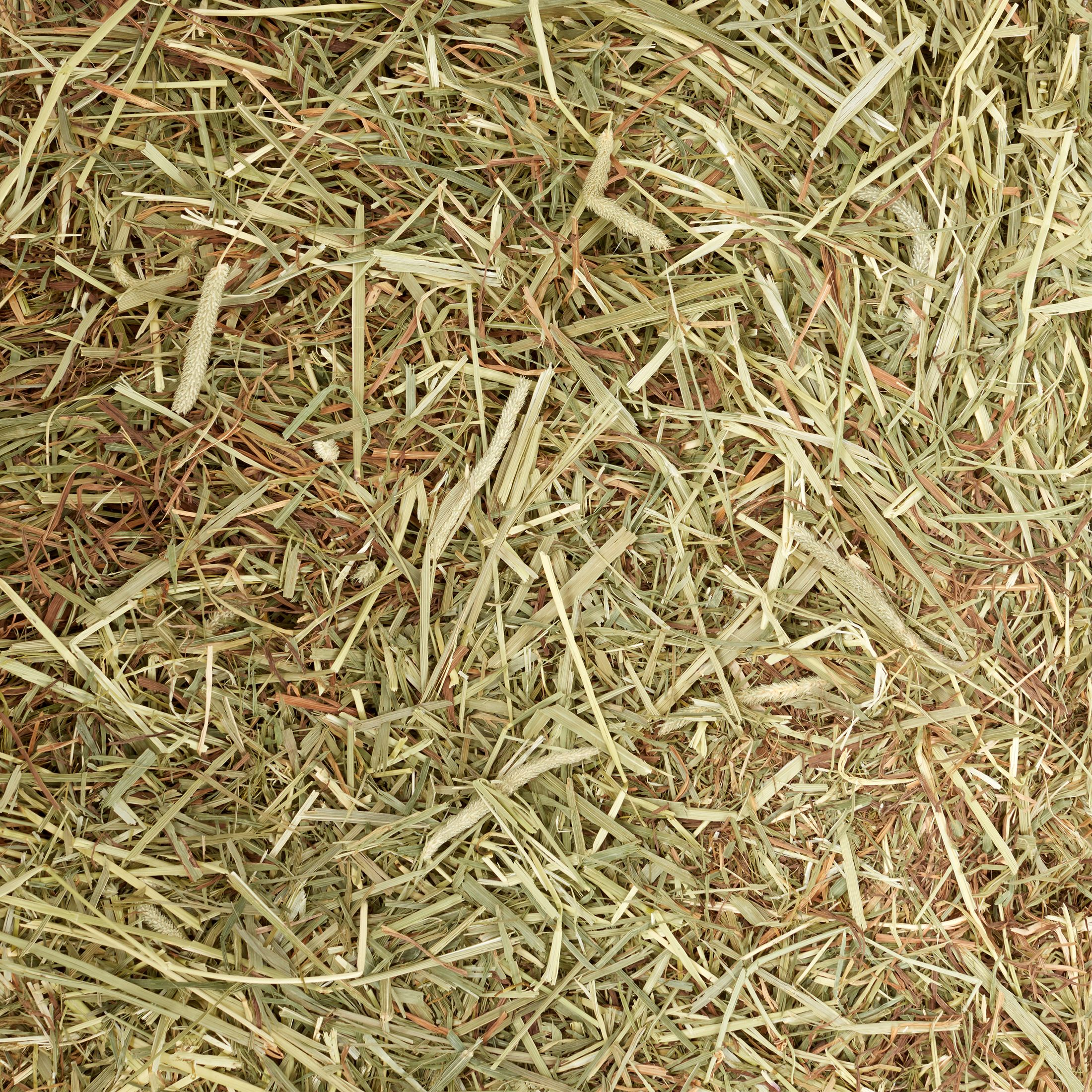 Oxbow Western Timothy Hay Dry Small Animal Food, 25 Lb