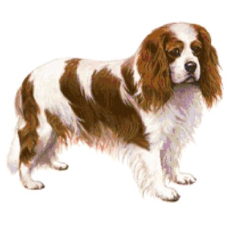 Cavalier Spaniel Embroidery - Cavalier King Charles Spaniel Dog Counted Cross Stitch Pattern