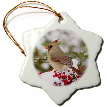 (3dRose Northern Cardinal female in Nandina bush in winter Marion Co. IL - Snowflake Ornament, 3-inch)