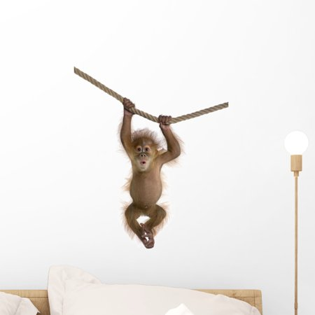 (Cute Monkey Pictures Hd Wall Decal by Wallmonkeys Peel and Stick Graphic (18 in H x 13 in W) WM255285)