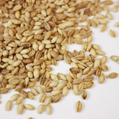 Barley Food (Organic Hulless Sprouting Barley - 4 Oz - Non-GMO Barley Seed - Husk Removed - Excellent Germination - For Sprouts, Barleygrass, Ornamental Grass, Emergency Supply, More )