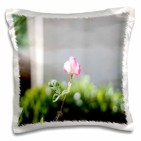 3dRose A Small Pink and White Rose Shot Close up with a Large Aperture and Green Leaves Blurred in Back - Pillow Case, 16 by 16-inch