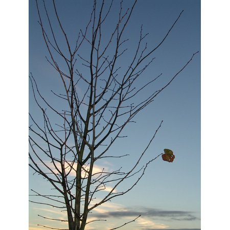 Laminated Poster Leaf Autumn Winter Tree Poster Print 24 x 36