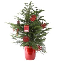 Delray Plants 3ft. Pine Christmas Tree