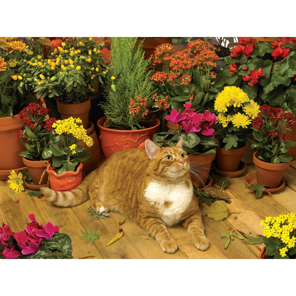 Autumn Breeze 500 Piece Puzzle,  Assorted Cats by Go! Games