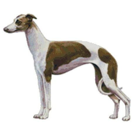 Italian Greyhound Dog Counted Cross Stitch Pattern