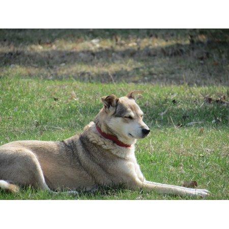 Canvas Print Pet Animals Pets Animal Man's Best Friend Dog Stretched Canvas 10 x (Top 10 Best Pets)