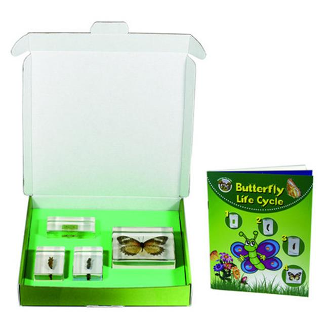 Butterfly Lifecycle 4pc Set