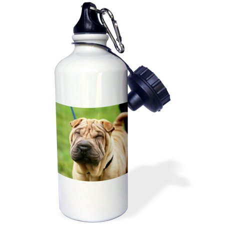 3dRose Shar pei, Sports Water Bottle, 21oz