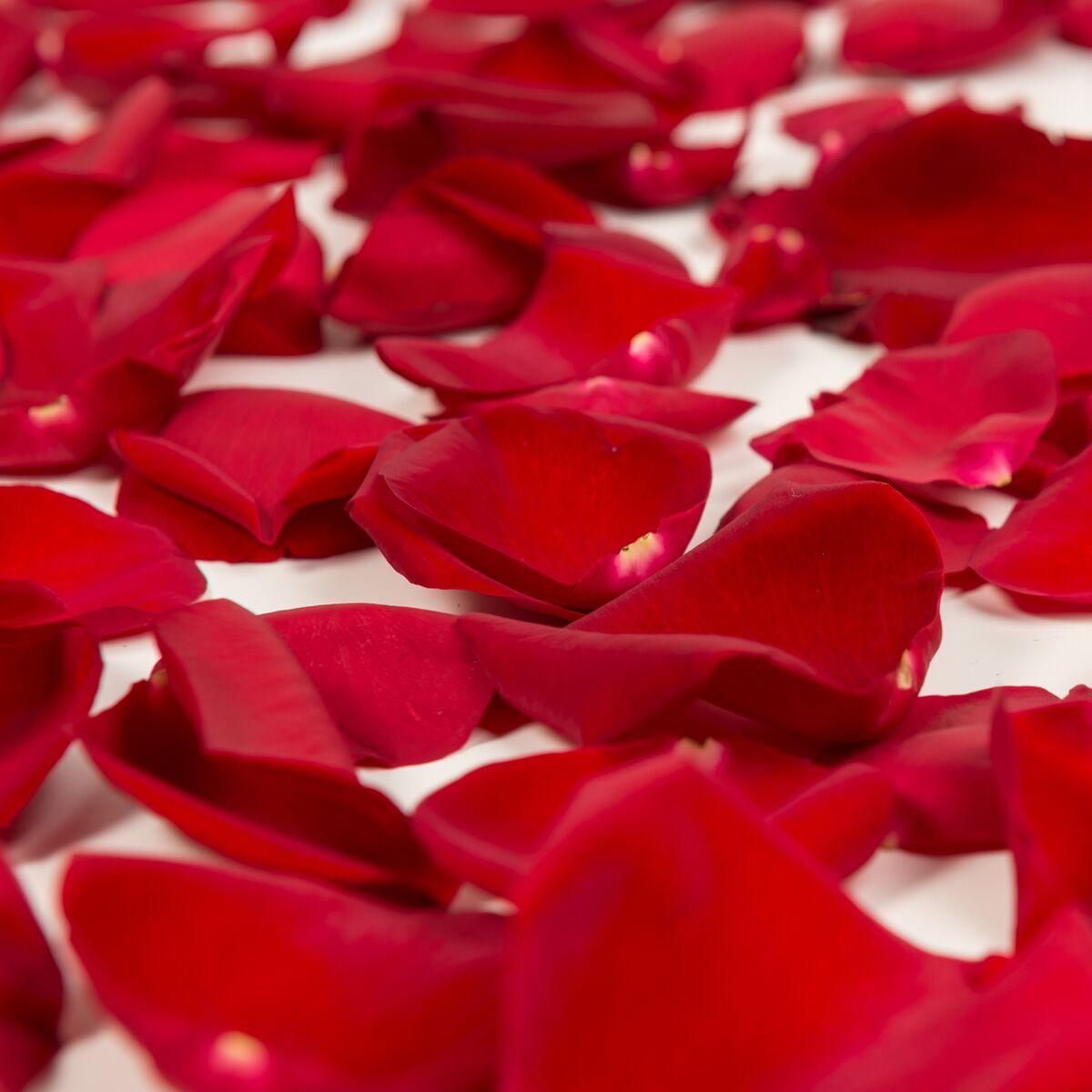 Natural Fresh Flowers - Red Rose Petals, Approximately 3000 petals