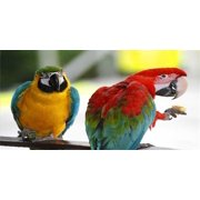 Two Parrots Perched Photo License Plate