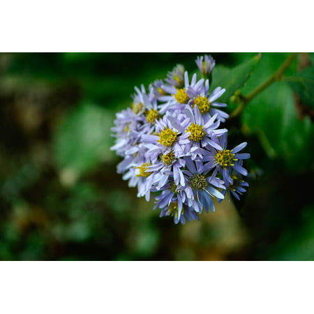 Peel-n-Stick Poster of Daisy Flowers Petal Autumn Blue Poster 24x16 Adhesive Sticker Poster Print