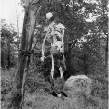 Image result for human skeleton in a tree