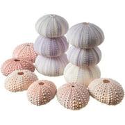 Sea Urchins | 6 Pink Sea Urchin Shells & 6 Purple Sea Urchin Shells | Crafts and Beach Decor