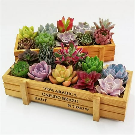 Fysho Retro Wooden Flower Herb Planter Succulent Pot Rectangle Trough Box Plant Bed (Fresh Herb Container Garden)