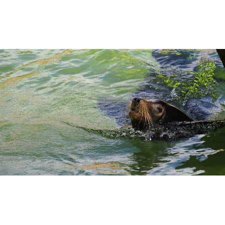 - canvas print water colorful seal animal colorful water zoo stretched canvas 10 x 14