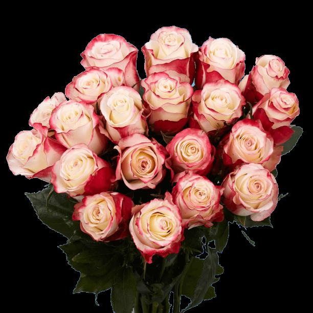 Fresh Cut Birthday Multicolor Roses