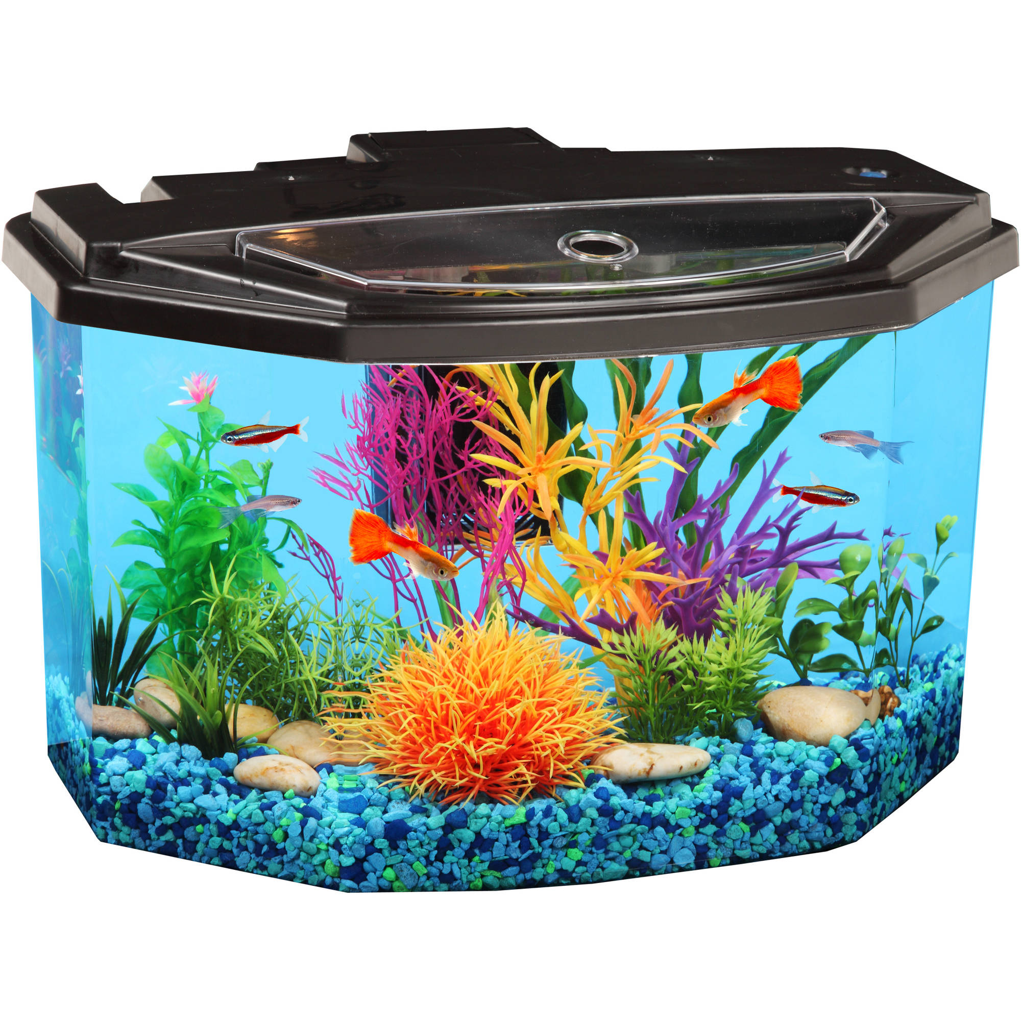 Hawkeye 3-Gallon Semi-Hex Aquarium with LED Lighting and Power Filter