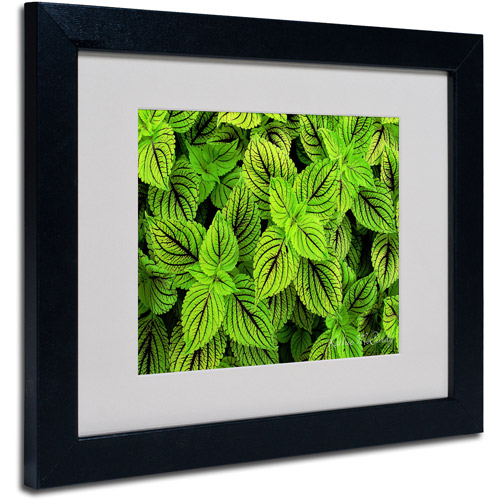 Trademark Art 'Coleus' Matted Framed Art by Kathie McCurdy